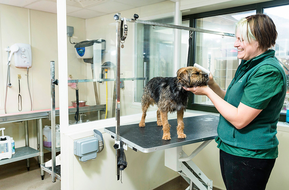 Extra dog care